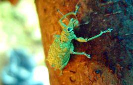 Nicht-identifiziertes Insekt