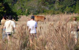 Beobachtung eines Sumpfhirsches