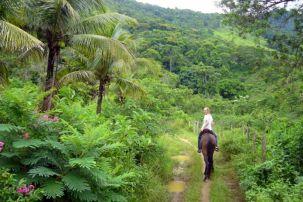 Ritt durch den Regenwald