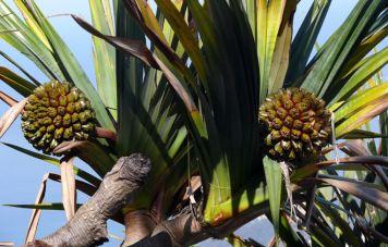 Flora des Küstenregenwalds