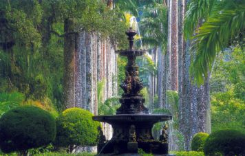 Der botanische Garten von Rio
