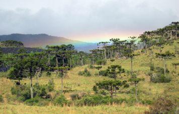 Regenbogen über Araukarien