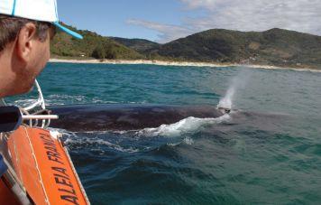 Beobachtung der Südlichen Glattwale