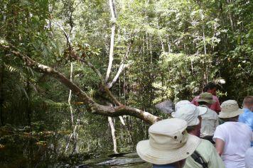 Mit dem Kanu durch Igapó-Regenwald