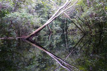 Kunstwerk der Natur – überschwemmter Igarpé-Regenwald