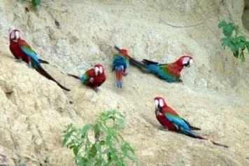 Paredão das Araras – die Ara-Wand