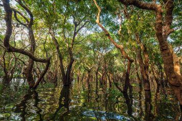 Mangrovenwälder im Rio Parnaíba Delta