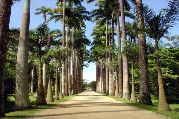 Jardim Botânico - der Botanische Garten