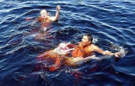 Rose Flussdelfin (Inia geoffrensis)