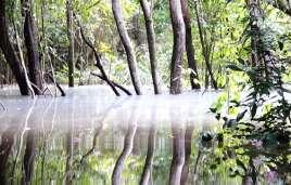 Nebel und Lichtreflexe eines Igarapés