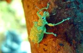 Interessantes Insekt