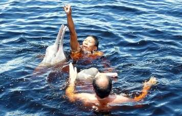 Schwimmen mit rosa Flussdelfinen (Inia geoffrensis)
