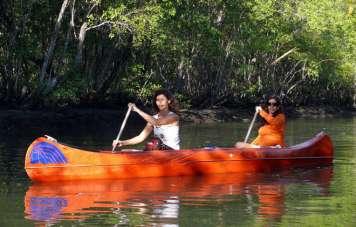 Paddelnd durch die Mangroven