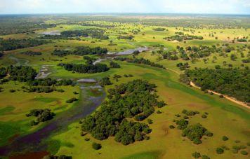 Das Pantanal: Habitat des Jaguars und des Riesenotters