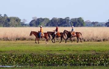 Ausritt durch den Pantanal
