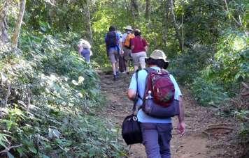 Wandern durch den Regenwald