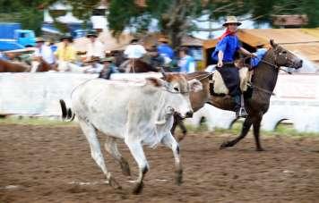 Gaúcho-Rodeo