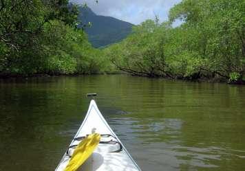 Paddeln durch Mangroven-Wälder